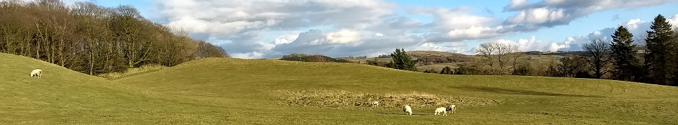 All pictures of drumlins from our daily dog walk